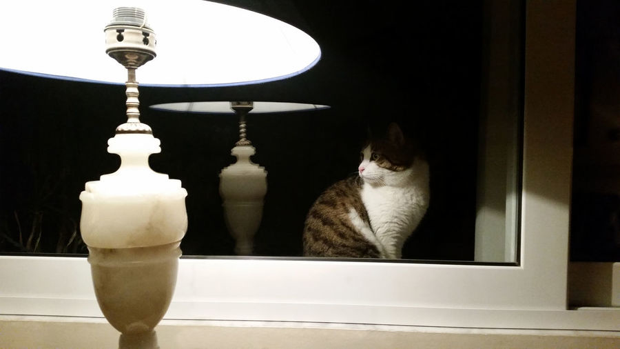 Close-Up Of Illuminated Lamp Shade With Reflection Of Cat In Mirror
