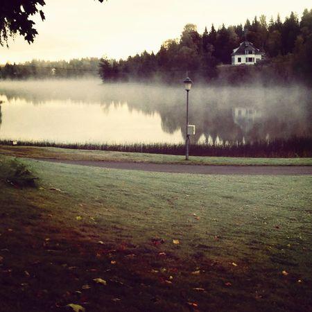 Frost Morning Loka