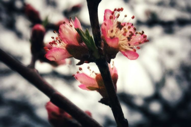 Shootermag Showcase April Eye4photography  Macro_collection EyeEm Gallery Tree Blooms Columbus, Ohio