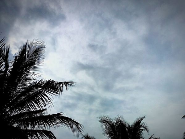 Clouds Sky Sky And Clouds Tree Tree Leaves Coconut Trees Cellphone Photography Huaweiphotography Huaweigr3