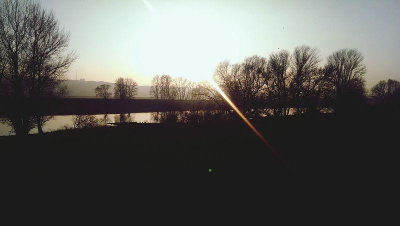 Nature Sun River Trees