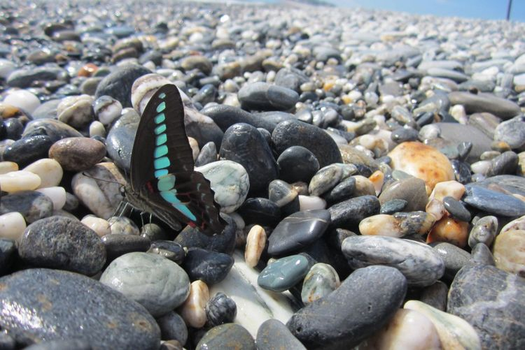 Butterfly On Pebble Stones At Beach