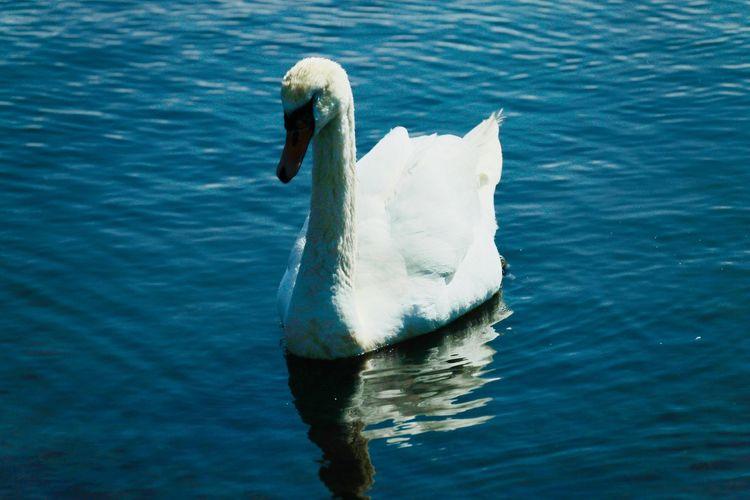 Water Animal Themes Animal Wildlife Animals In The Wild One Animal Animal Vertebrate