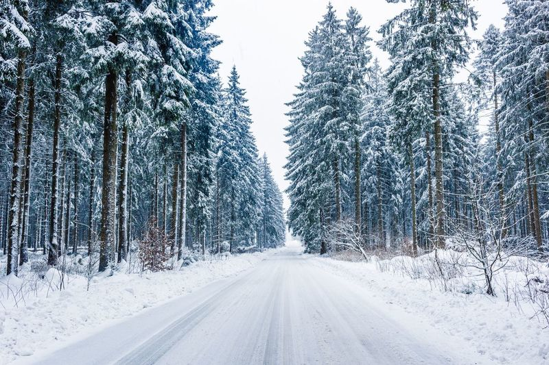 A snowy road. Winter Snow Cold Temperature Nature Weather Tree Transportation Road Beauty In Nature No People Scenics Tranquil Scene Day The Way Forward Frozen Tire Track Tranquility Outdoors Snowing Landscape Shades Of Winter