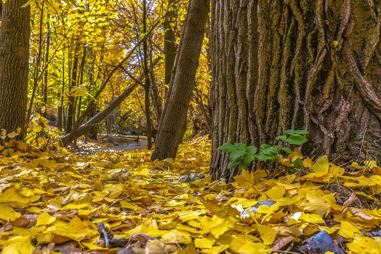 Yellow flowering plants and trees in forest during autumn