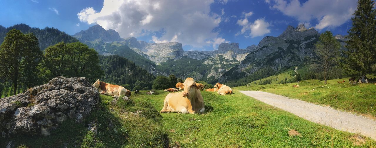 Mountain Cow Panorama Austria Plant Tree Mammal Cloud - Sky Nature Beauty In Nature Sky Animal Themes Sunlight Day Grass Landscape No People Green Color Scenics - Nature Land