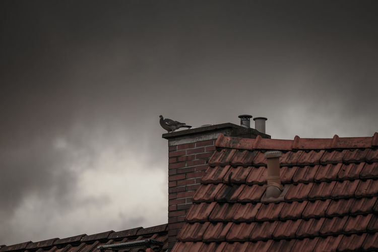 Low angle view of bird on house roof against cloudy sky
