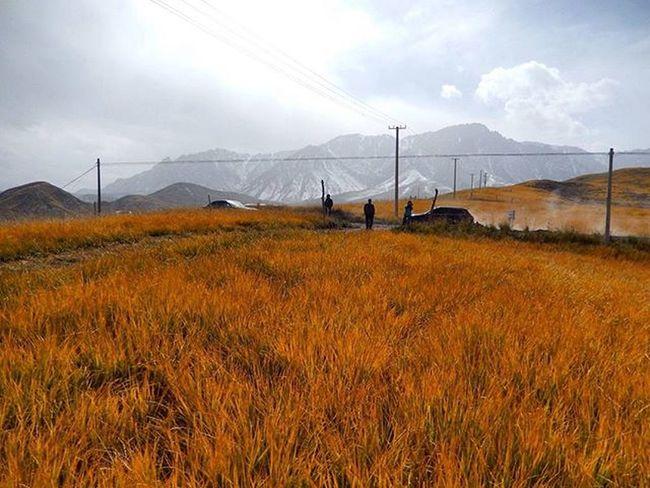 马蹄寺附近 Autumn 马蹄寺 Temple Gansu China Northwesternchina Chinamountain Chinatour