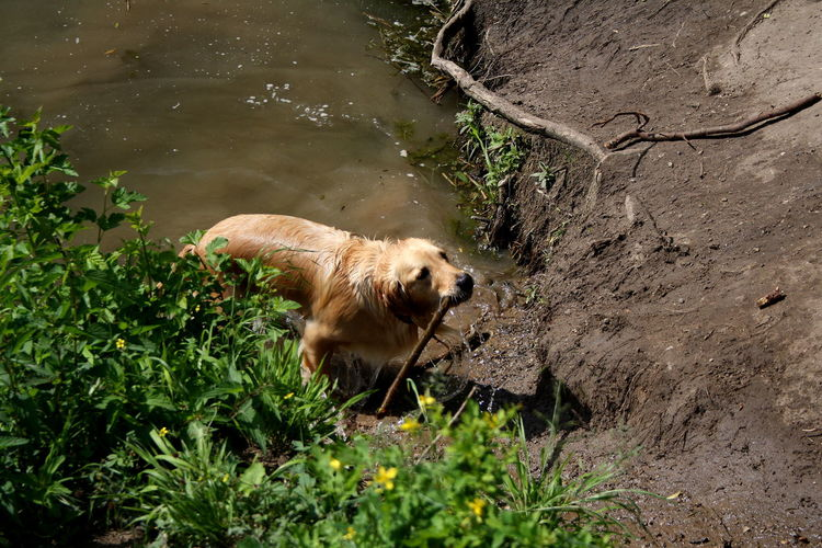 Animal Themes Beauty In Nature Day Dog Dog In Water Dog With A Ball Domestic Animals EyeEm Animal Lover EyeEm Nature Lover Grass Lake Mammal Nature No People One Animal Outdoors Pets Plant Water Wet Dog