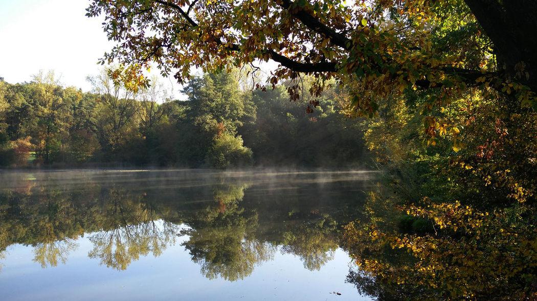 Tree Reflection Lake Water Beauty In Nature Tranquility Tranquil Scene Nature Scenics - Nature Autumn Waterfront Idyllic Reflection Lake