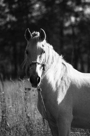 Portrait of horse on field