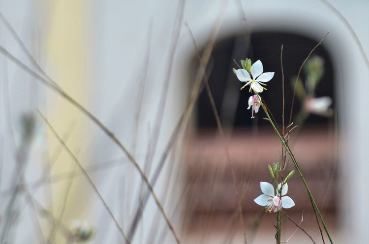 Eye4photography  EyeEm Gallery EyeEm Nature Lover From My Point Of View Flower Plant Flowering Plant Fragility Beauty In Nature Vulnerability  Freshness Nature White Color Growth Focus On Foreground Close-up Day No People Petal Flower Head Outdoors Selective Focus