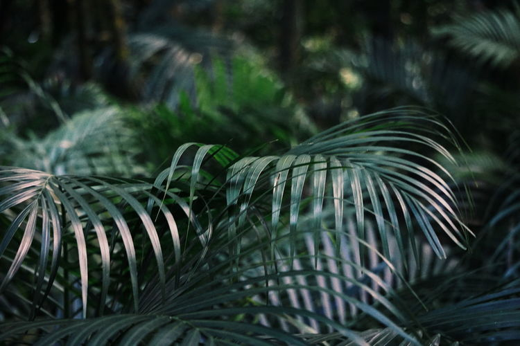 Palm leafs Background Palm Leaf Backgrounds Palm Leaf Palm Palm Tree Tree Palm Leaf Palm Tree Plant Leaf Green Color Nature Plant Part Tropical Climate Beauty In Nature Tranquility Coniferous Tree Growth