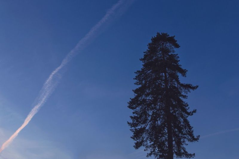 Low angle view of tree against vapor trail in sky