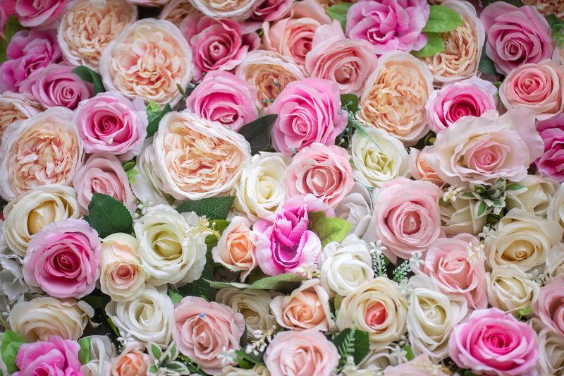 Full frame shot of colorful roses