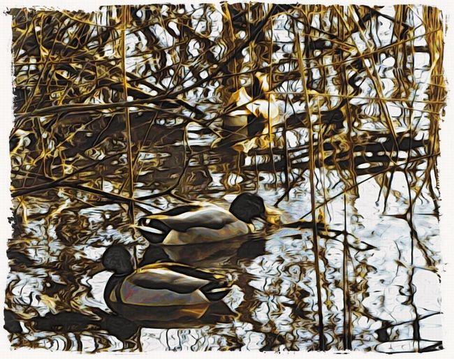Japanese woodcut effect Moku Hanga Jixipix Ducks In The Reeds Lake Sunshine Winter Water Waterfowl Bird Nature Day No People Animals In The Wild Animal Themes Outdoors