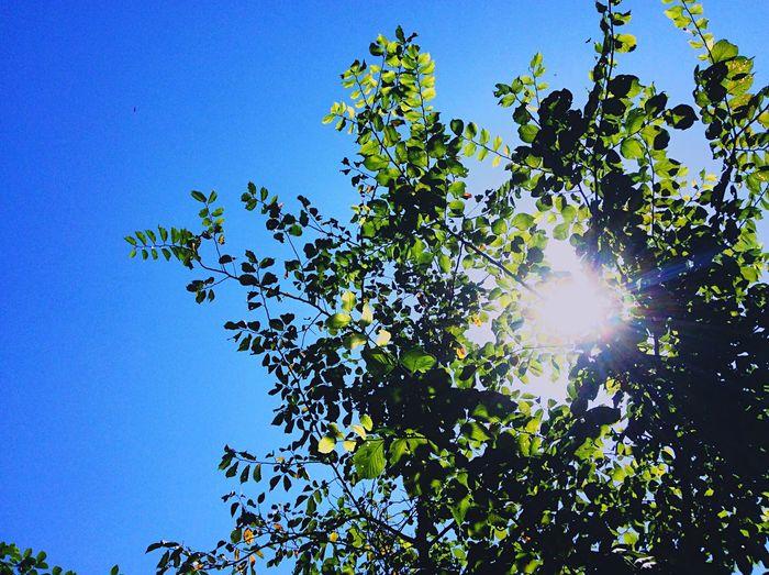 San Солнышко Листочки Sky InTheSky Dagestan небо голубоенебо
