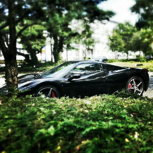 Ferrai Ferrari Exotic Cars