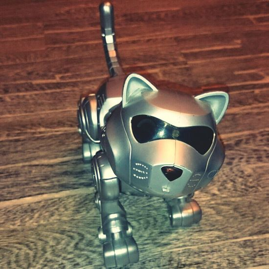 Play With The Animals Cat Robot Miaou