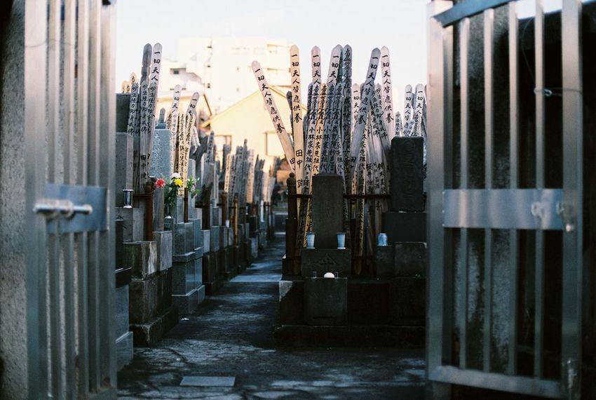 Autumn Film Photography Filmisnotdead Graveyard Japan Japan Graveyard Japan Photography Japanese  Tokyo Tokyo Street Photography