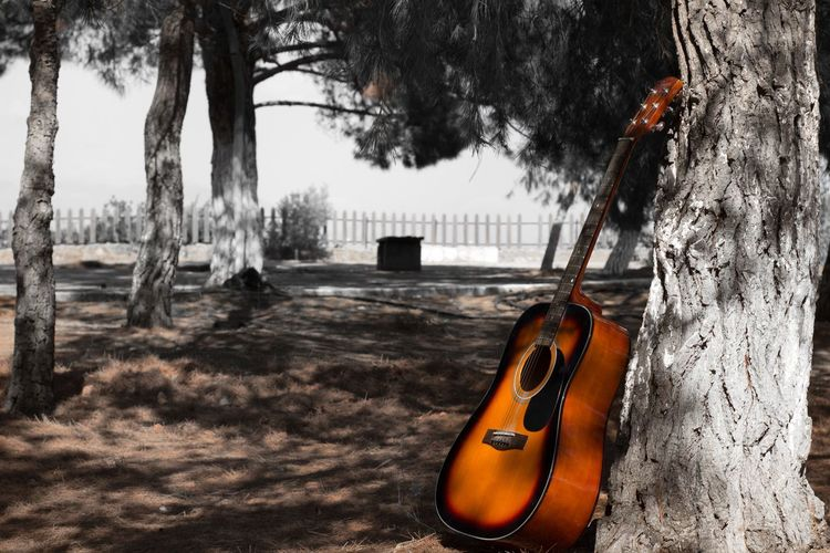 Guitar on a