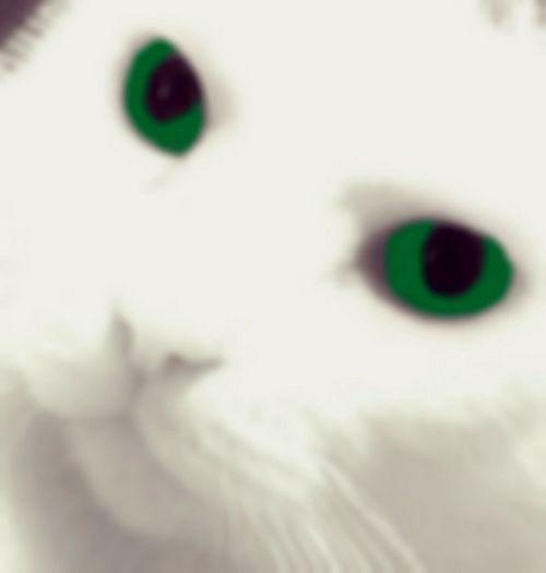 Funwithphotos Funwithediting Cat Lovers Greeneyes Light And Shadows