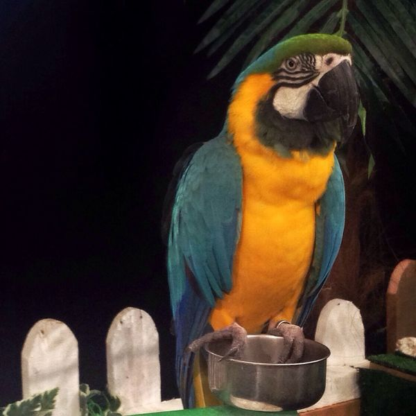 Parrot Colorful Parrot Bird Photography Hanging Out Zoo IPhoneography IPS2016Composition