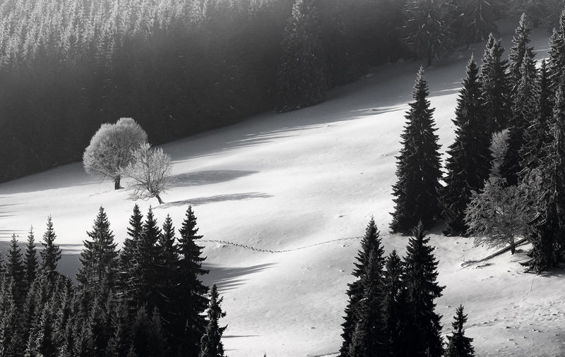 Abstract black and white winter landscape Abstract Beauty In Nature Black & White Black And White Blackandwhite Blackandwhite Photography Cold Cold Temperature Day Forest Growth Landscape Nature No People Outdoors Scenics Snow Tranquil Scene Tranquility Tree Water Winter