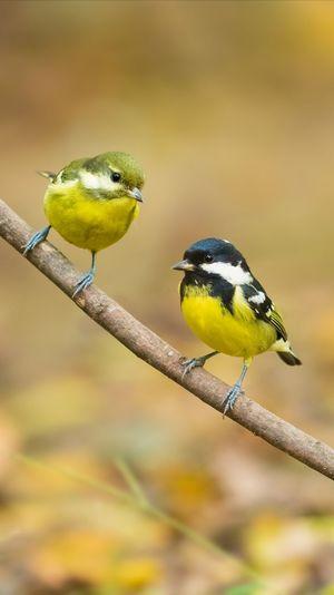 【扬州魔术林】双栖 Bird