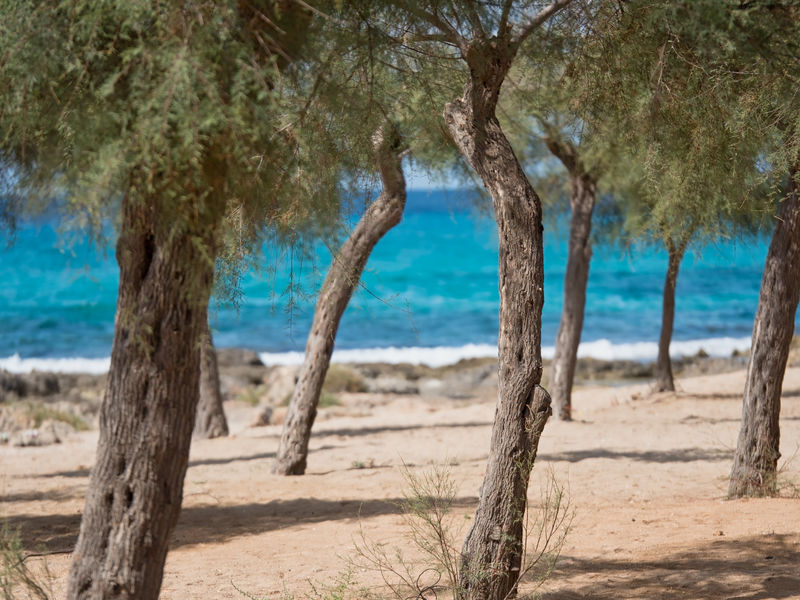 Il mare del Salento Beach Beauty In Nature Horizon Over Water Landscape Lecce Nature No People Outdoors Pug Salento Salento Puglia Sand Sea Shadow Summer Torre San Giovanni Tranquility Tree Tree Trunk Vacations Water