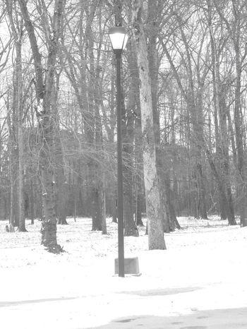 Snow Nature Park Winter Light Post