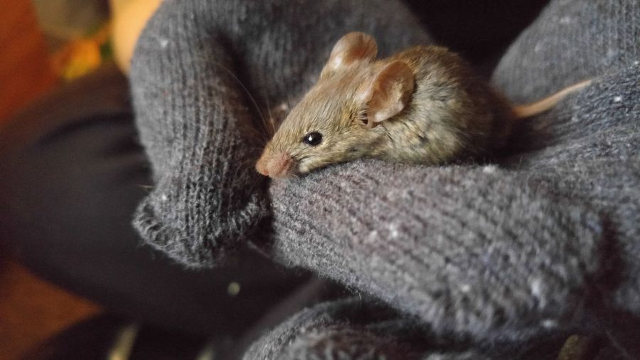 Close-up of person holding mouse while sitting at home