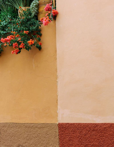 Pattern, Texture, Shape And Form Pattern Abstract Abstract Photography Door San Miguel De Allende Mexico Colorful Colors Geometric Shapes Streetphotography Street Photography Magic Moments Built Structure Architecture Building Exterior No People Day Outdoors Plant Wall - Building Feature Flower Flowering Plant Growth Nature Red Brown Beige Close-up Wall Orange Color Potted Plant Multi Colored