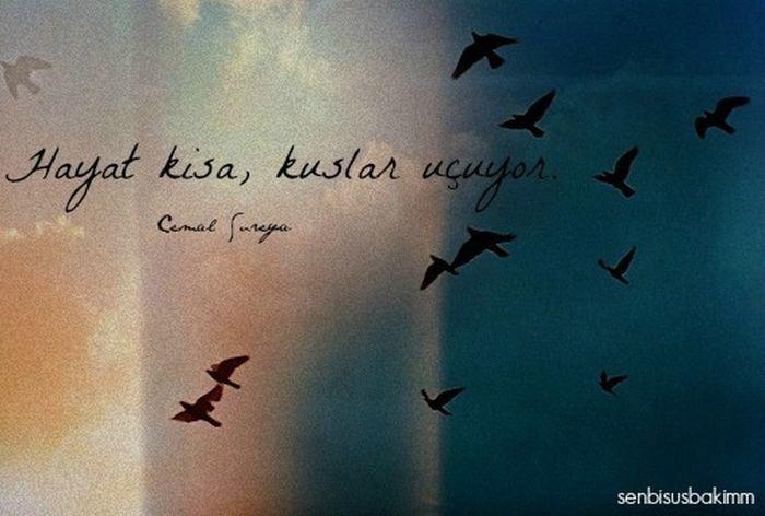 Hayat kısa , kuşlar uçuyor Cemalsureyya
