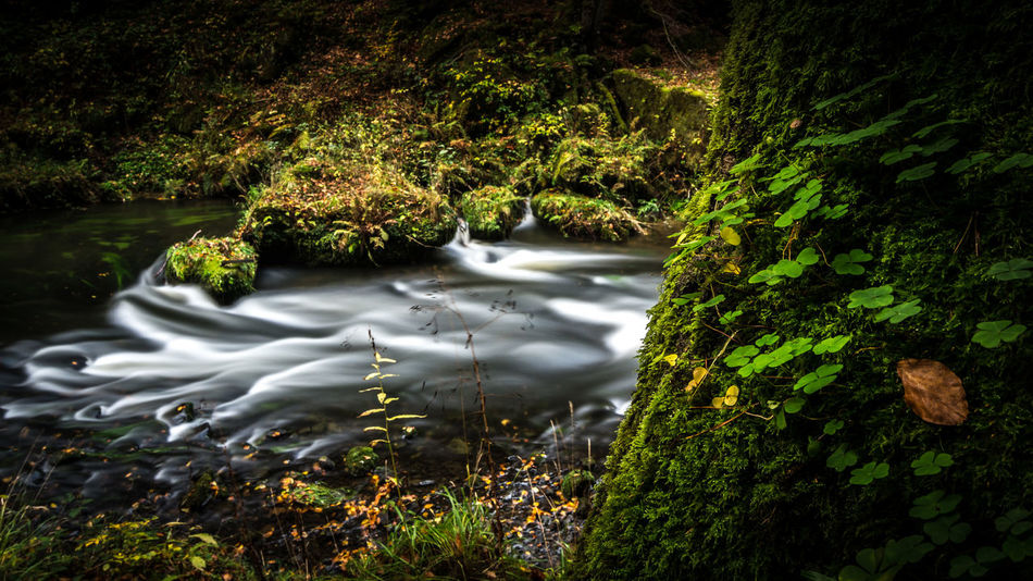 In da flow The Week On EyeEm Green Green Color Calm EyeEm Best Shots EyeEm Nature Lover Flow  Nature The Week On EyeEm Beauty In Nature Day Focus On Foreground Forest Grass Growth Leaf Long Exposure Nature Outdoors Plant River Time Tranquility Tree Water