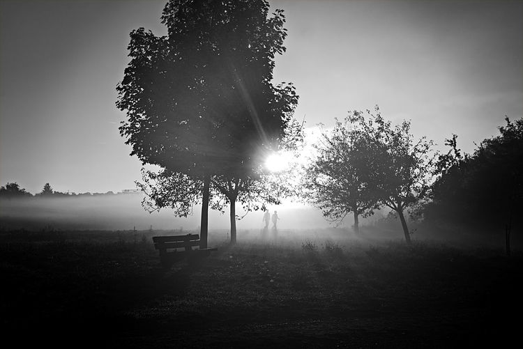 Tree Plant Tranquility Sky Nature Sunlight Landscape Beauty In Nature Silhouette Fog Field Outdoors Blackandwhite Photography Lens Flare Tranquil Scene