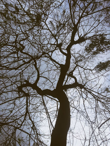 jungle Jungle Tree Branch Leaf Backgrounds Tree Trunk Sky EyeEmNewHere