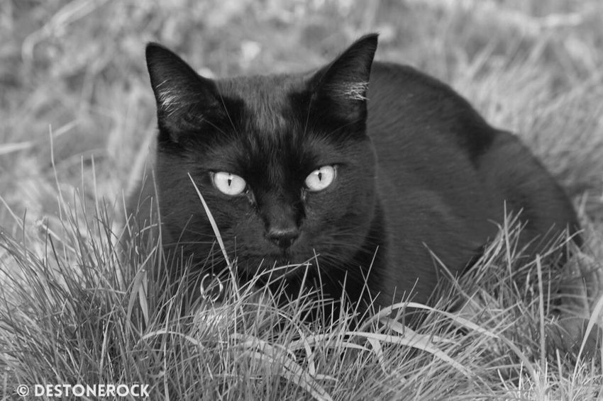 Black And White Blackandwhite Black & White Photography Taking Photos Taking Pictures Testing Camera Walking Around Camera Practice Cat Lovers BLackCat