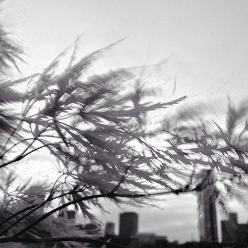Up Close Street Photography Motion Blur Landscape Trees Japanese Maple Wind JohnRuggieri Blackandwhite Black & White Motion