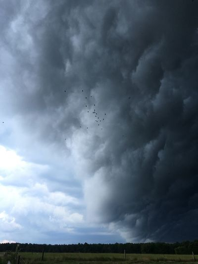 Animal Themes Beauty In Nature Bird Cloud - Sky Day Field Flying Forked Lightning Landscape Large Group Of Animals Lightning Nature No People Outdoors Power In Nature Rural Scene Scenics Sky Storm Storm Cloud Thunderstorm Tornado Weather