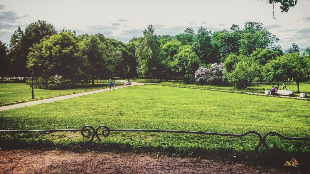 Saint-Petersburg Tavricheskiy Garden Summer Tree Green Color Grass Field Real People Nature Growth Day Beauty In Nature Outdoors Men People Sky Adult Only Men Summer Saint Petersburg Tavrichesky Garden First Eyeem Photo
