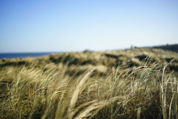 the baltic sea through the reed Baltic Baltic Sea Landscape_Collection Nature Nature Photography Ostsee Ostseeküste WeissenhäuserStrand Coast Landscape Landscape_photography Nature_collection Reed Weißenhäuser Strand
