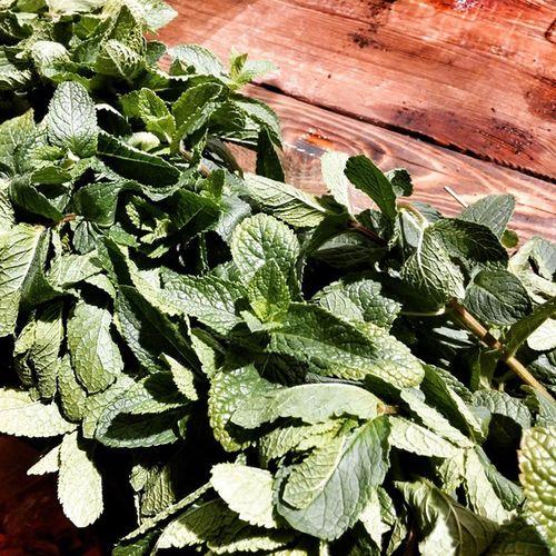Вот все перепробуешь на деньфермера и обедать уже нет смысла ггг🙈 деньфермера Goodwine Goodwineua Goodfood мята Mint Mintdetector Greenmint Organic Organicfood