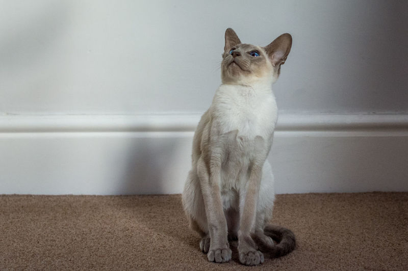 Cat looking away while sitting on wall at home