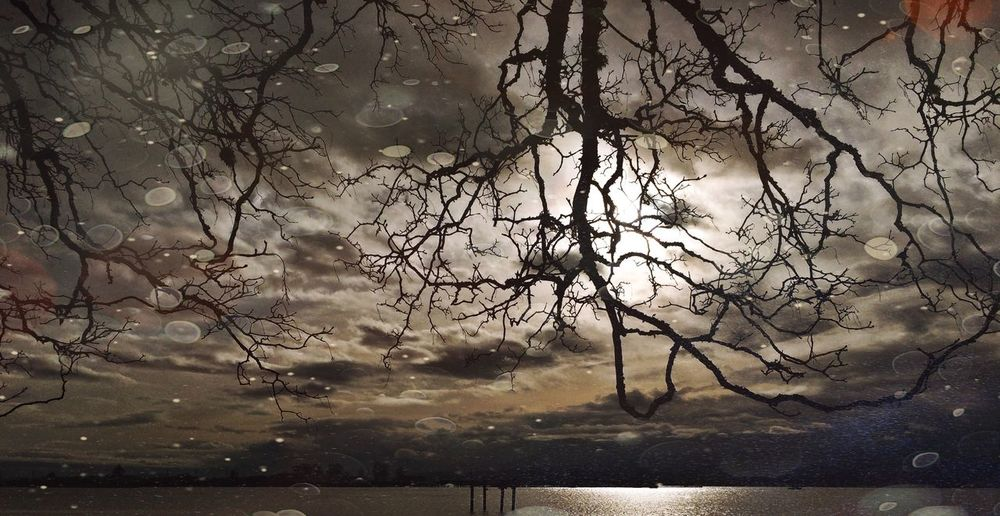 Bare trees by calm lake