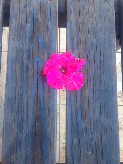 Wood - Material Flower Pink Color Beauty In Nature Composition My Point Of View