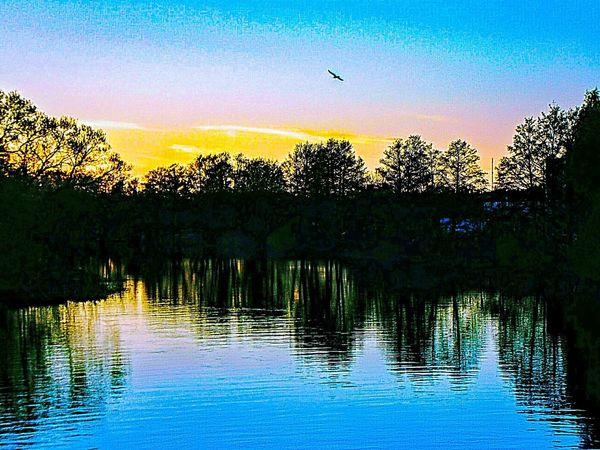 Sweden The True Story Eskilstuna-streetphotography Summer Exploratorium EyeEmNewHere Bird Tree Water Sunset Silhouette Lake Flying Reflection Sky