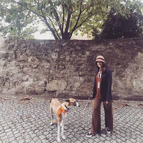 Greyt. (Run.) Greyhound AdoptaGreyhound Greyhounds Greyhoundsofinstagram Grayhoundrescue Greyhoundlovers Dog Dogs Dogsofinstagram Theinstagreyhound Theinstasighthound Sighthound Sighthounds Galgo Galgos Poiseonthewall
