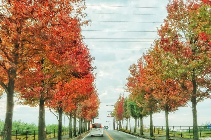 並木道 並木 アメリカフウ モミジバフウ 道路 ドライブ Day Tree Hanging Outdoors No People Growth Sky Nature Nature Architecture Naturelovers Avenue Road Beauty In Nature Autumn Colored Leaves Autumn Leaves Autumn Colors Close-up