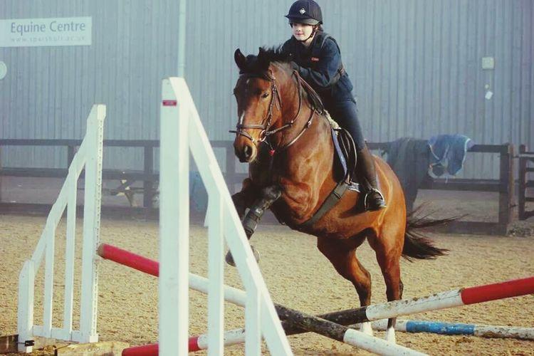 Horses Irish Sports Horse
